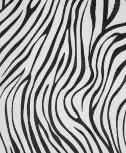 Echantillon-Zebre